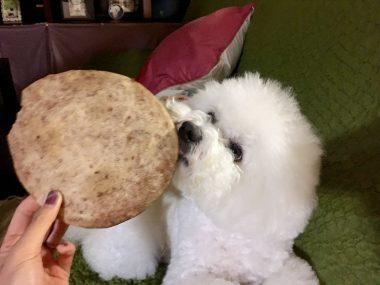 お米粉でいちごのクッキー ビションフリーゼ おもち  A7A2327A-07EA-4C4F-9358-553BB741E797-380x285