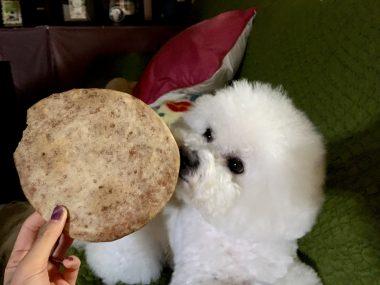 お米粉でいちごのクッキー ビションフリーゼ おもち  D87A053E-A282-4CAC-AB5B-B7C2612492B5-380x285