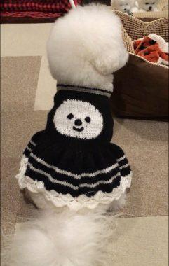 シロの母さん印のセーター(^o^) ビションフリーゼ おもち  F4C2A5F1-4FD4-4A02-B333-07CB11C16A7B-241x380