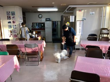 ☆おもの仙台旅行記☆ビジネス旅館オタマヤさんの朝 ビションフリーゼ おもち  6520C760-0F3B-4806-AD0D-85AE72AB37BC-380x285