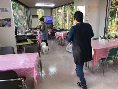 ☆おもの仙台旅行記☆ビジネス旅館オタマヤさんの朝 ビションフリーゼ おもち  75E50186-989D-4CC0-BB2D-B13930E19109-380x285