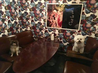 銀座の素敵なカフェ ビションフリーゼ おもち  CA66DA6C-2F3B-4047-BCEB-B827A0AB8551-380x285