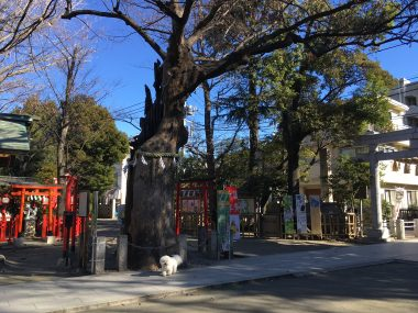 新田神社にご挨拶 ビションフリーゼ おもち  002B4A81-D3C4-462A-8AF6-919EAFB26533-380x285