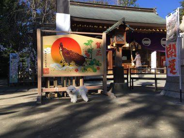 新田神社にご挨拶 ビションフリーゼ おもち  1873ECDC-AB8A-4103-BF87-D83EAA05CD62-380x285