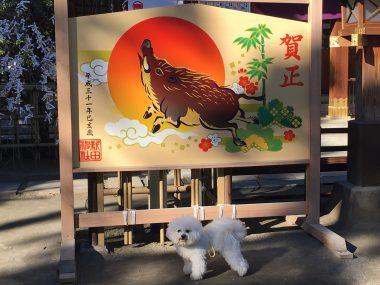 新田神社にご挨拶 ビションフリーゼ おもち  94BAAC4C-50F3-4DDE-B038-4D951AEA4D22-380x285
