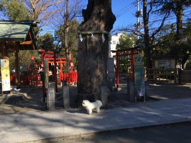 新田神社にご挨拶 ビションフリーゼ おもち  BF082BAA-8576-4C4C-B629-34A75D9D36C6-380x285
