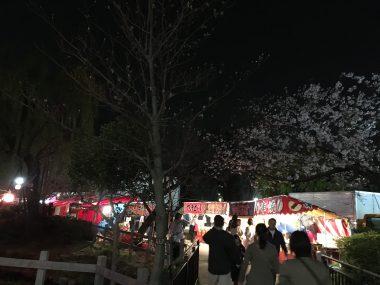 おもちふくらむ夜桜 ビションフリーゼ おもち  801446A5-0E50-4295-91D0-08FC899C20EB-380x285