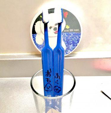 凄く良い歯ブラシとお粉を頂きました✨ ビションフリーゼ おもち  E72A65D9-A71A-47CA-9079-9BB6872265D0-374x380
