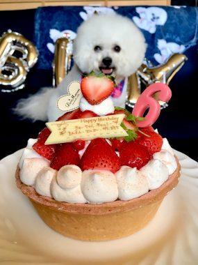 おもちゃんたちのお誕生日 ビションフリーゼ おもち  0EDBF4DC-D418-468F-9A42-D249F0A3CA22-285x380