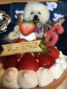 おもちゃんたちのお誕生日 ビションフリーゼ おもち  1FE551D4-2D90-43E4-A7CD-D117B9F0F681-e1564929523368-285x380